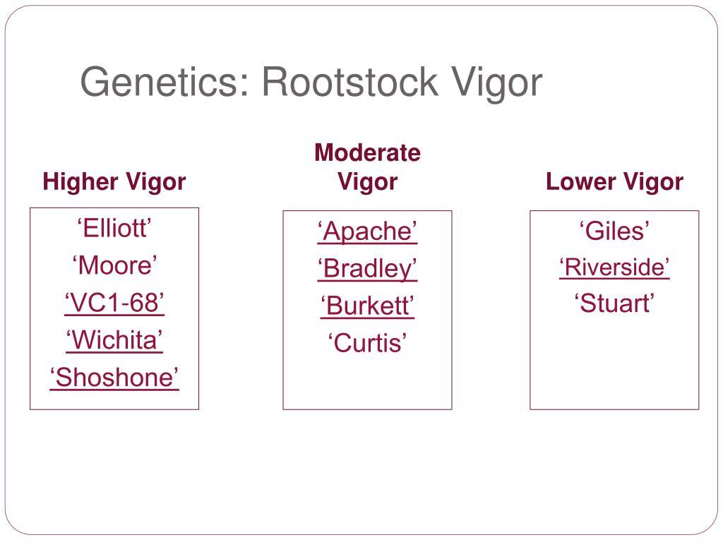 Genetics: Rootstock Vigor