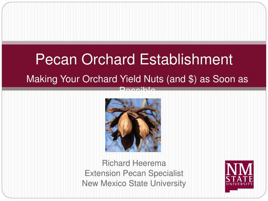 Pecan Orchard Establishment