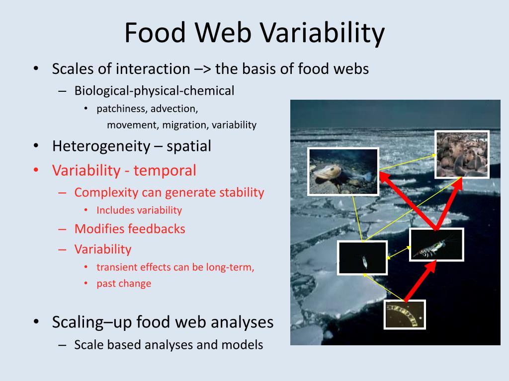 Food Web Variability