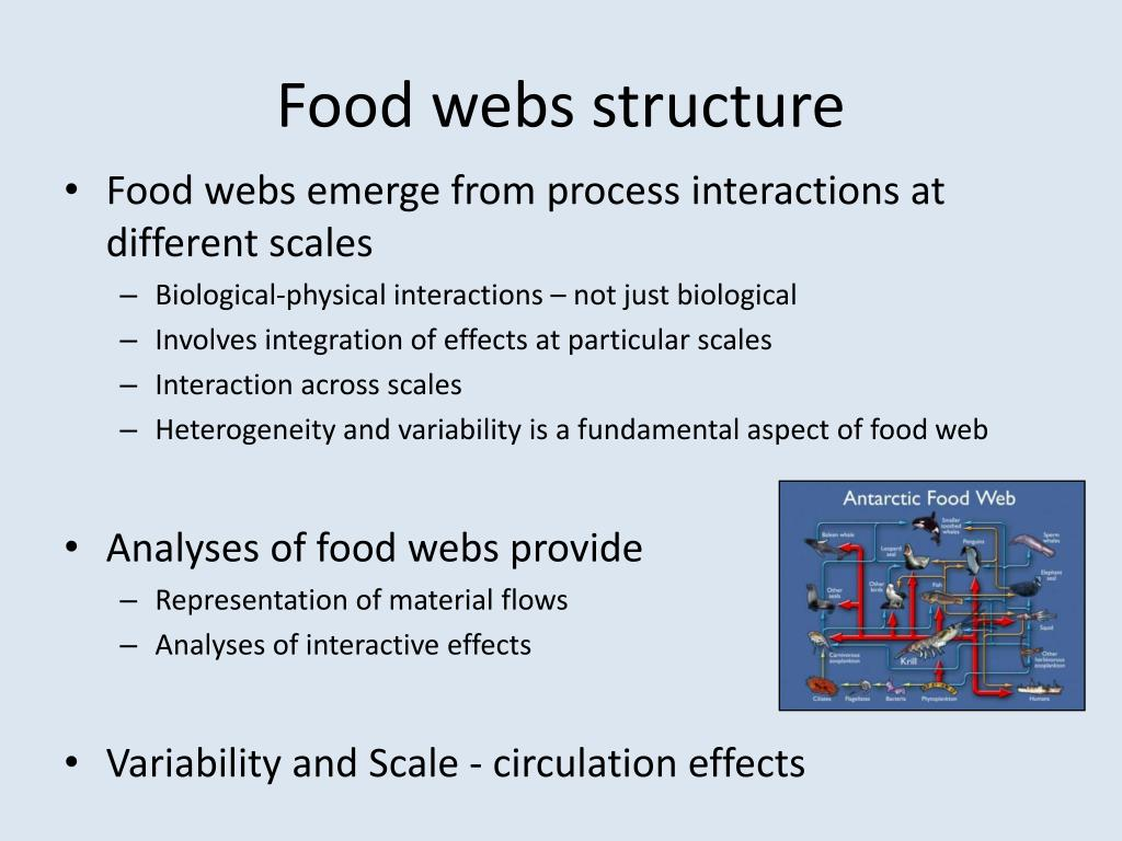 Food webs structure