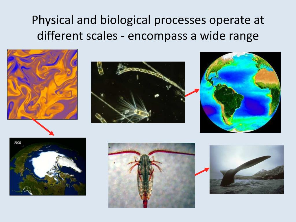 Physical and biological processes operate at different scales - encompass a wide range
