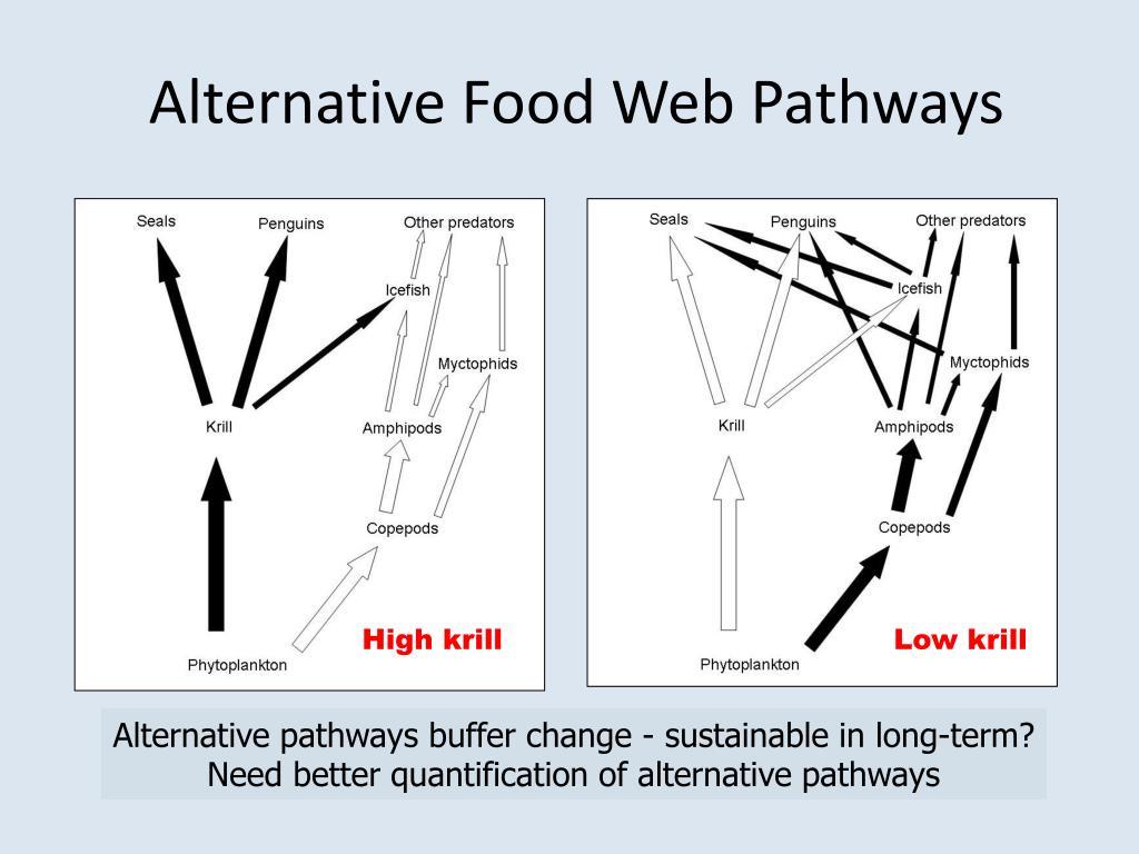 Alternative Food Web Pathways