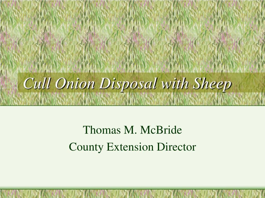 cull onion disposal with sheep l.