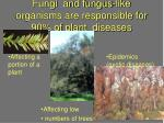 fungi and fungus like organisms are responsible for 90 of plant diseases