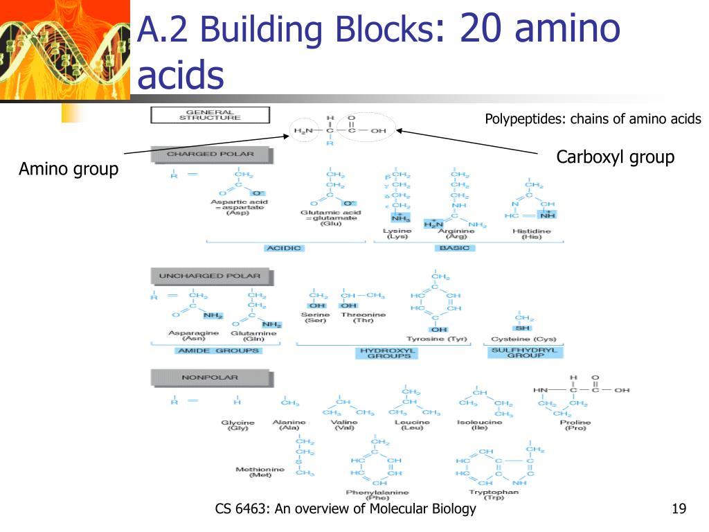 A.2 Building Blocks