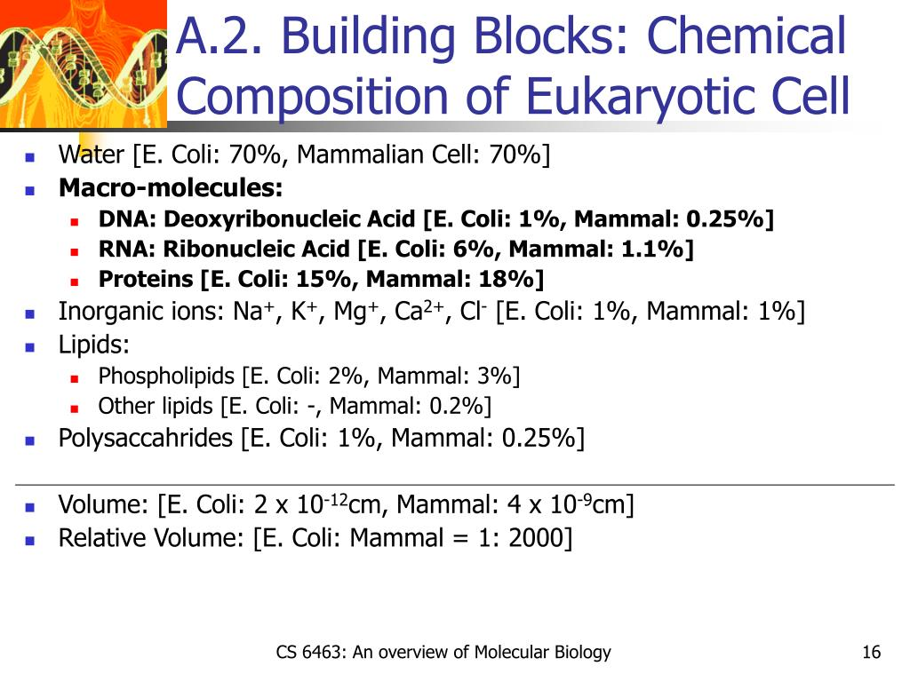 A.2. Building Blocks: Chemical Composition of Eukaryotic Cell