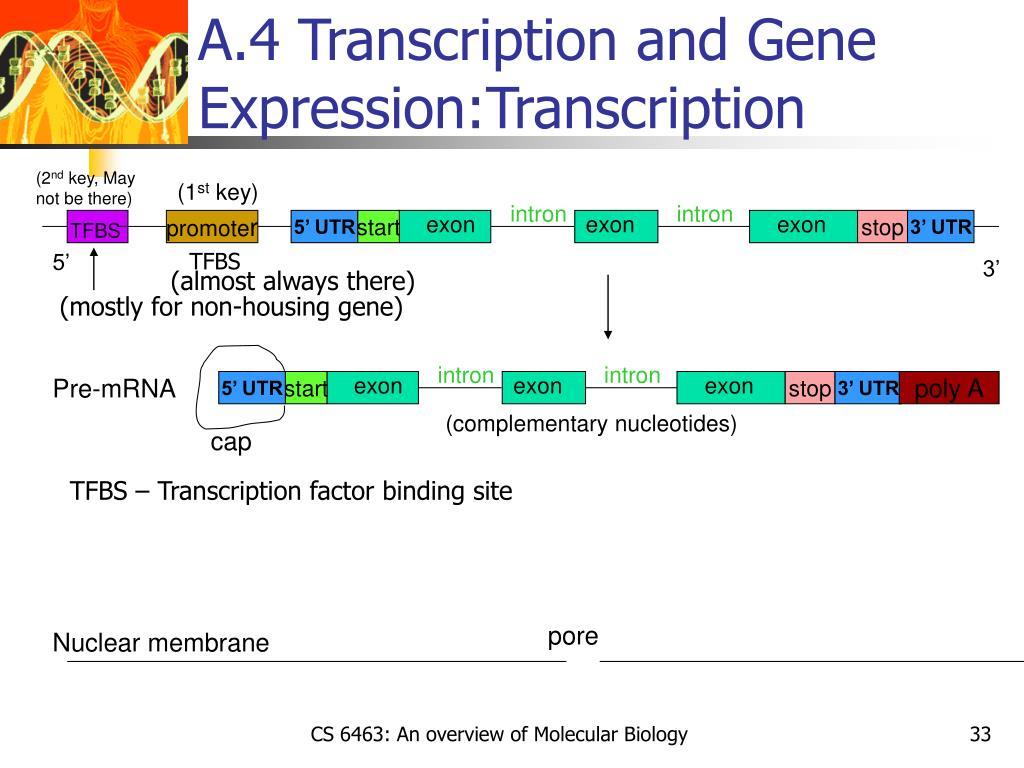 A.4 Transcription and Gene Expression:Transcription