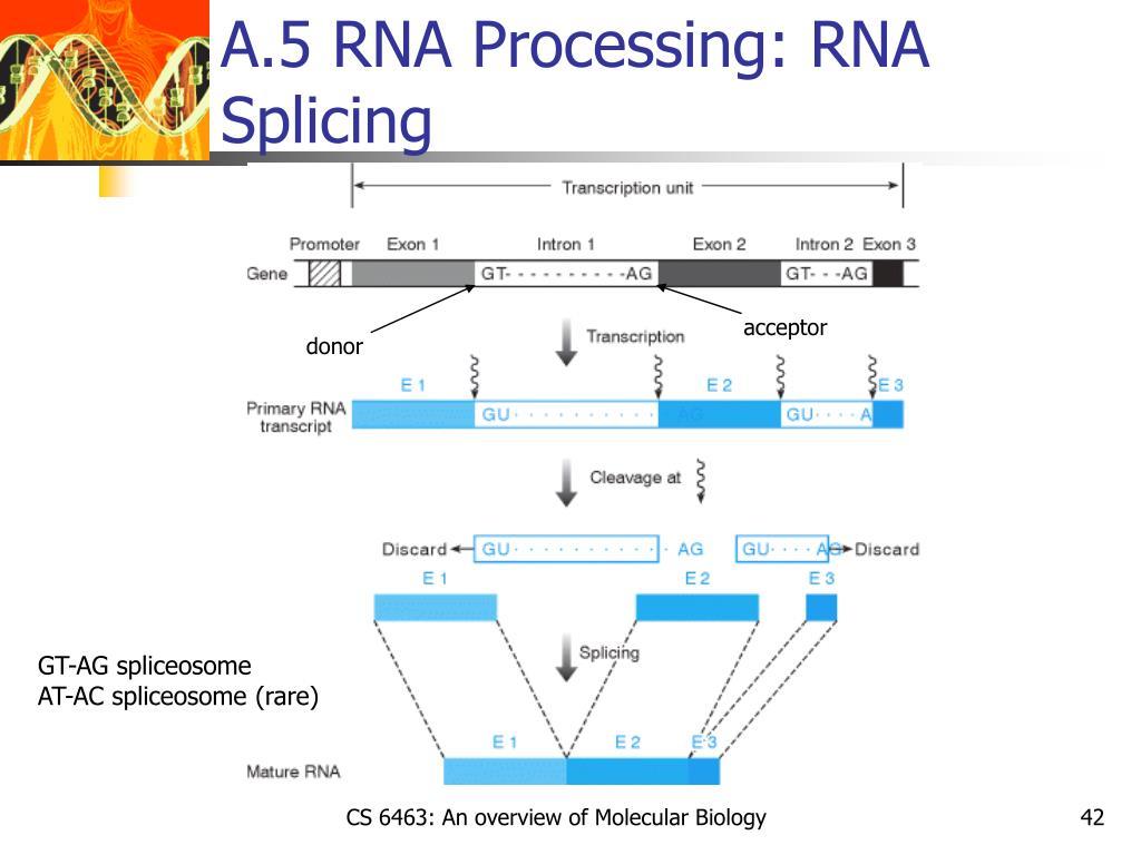 A.5 RNA Processing: RNA Splicing