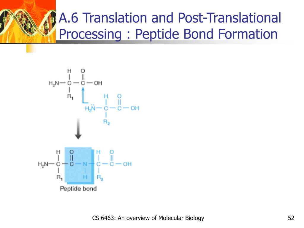 A.6 Translation and Post-Translational Processing : Peptide Bond Formation