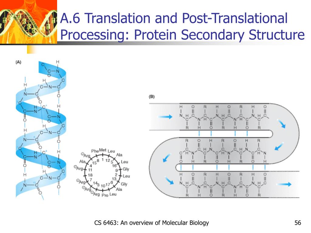 A.6 Translation and Post-Translational Processing: Protein Secondary Structure