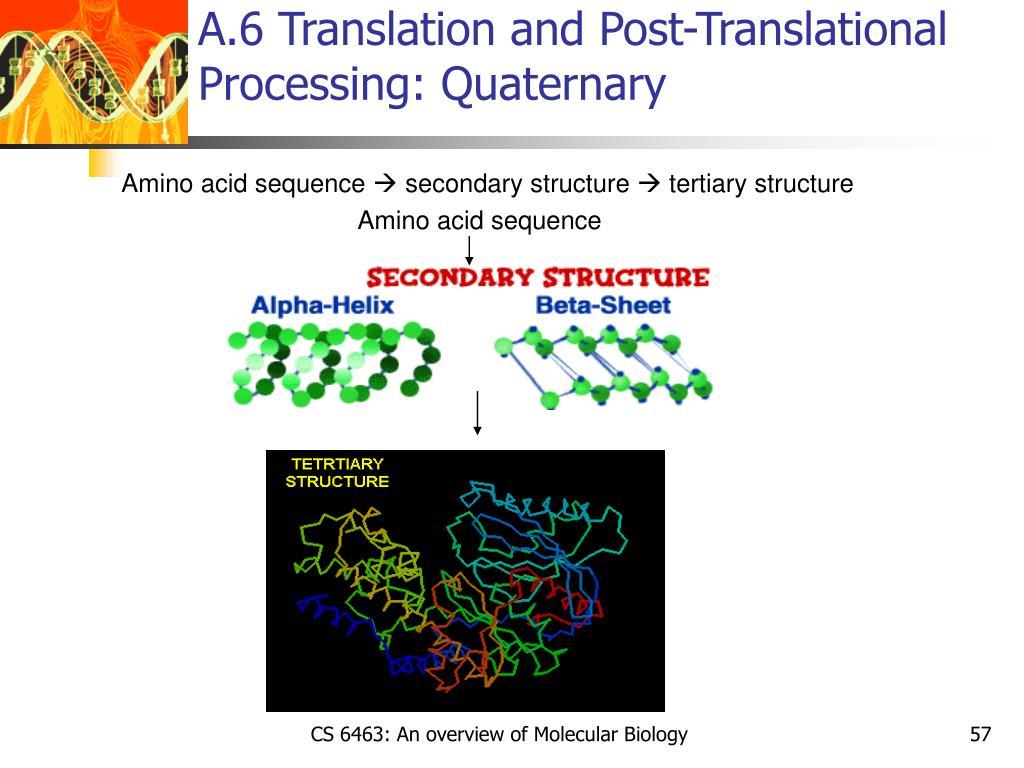 A.6 Translation and Post-Translational Processing: Quaternary
