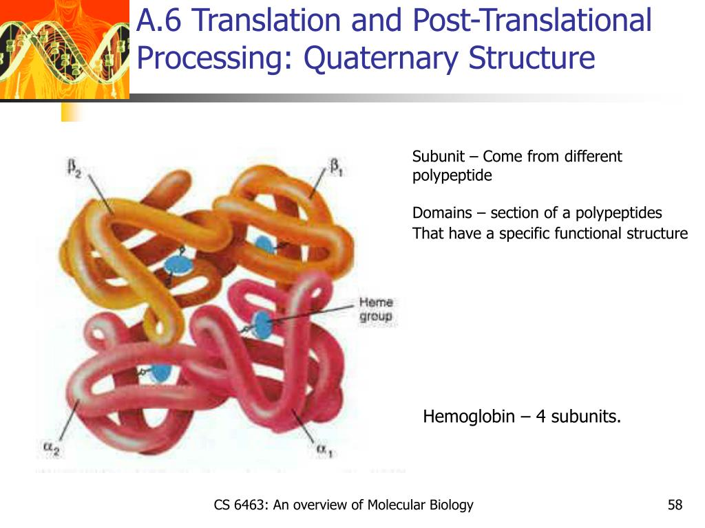 A.6 Translation and Post-Translational Processing: Quaternary Structure