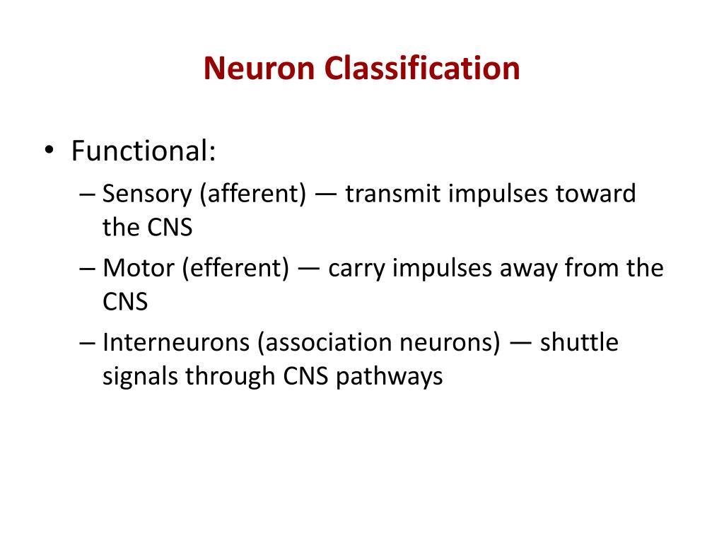 Neuron Classification