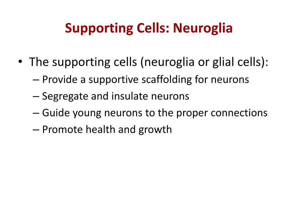 Supporting Cells: