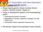 a 4 transcription and gene expression tissue specific genes