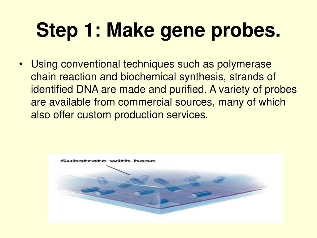 Step 1: Make gene probes.