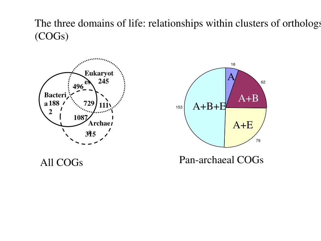 The three domains of life: relationships within clusters of orthologs