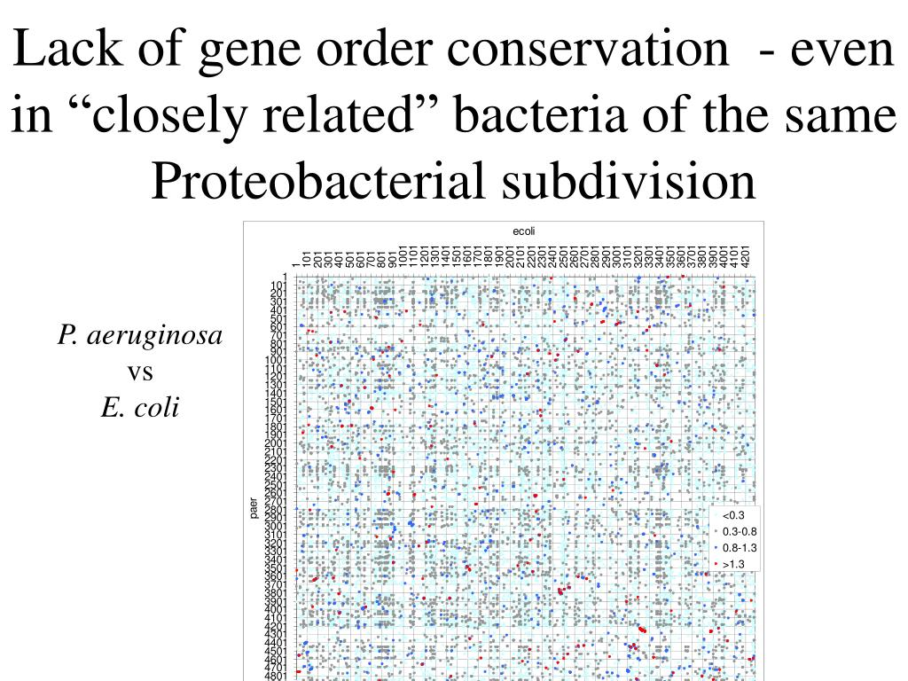 """Lack of gene order conservation  - even in """"closely related"""" bacteria of the same Proteobacterial subdivision"""