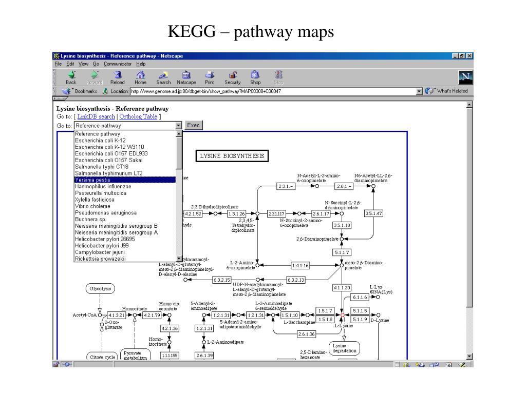 KEGG – pathway maps