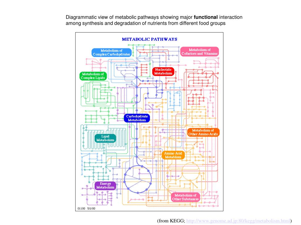 Diagrammatic view of metabolic pathways showing major