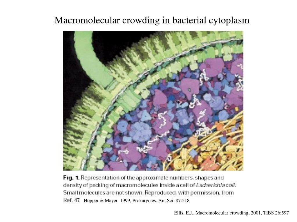 Macromolecular crowding in bacterial cytoplasm