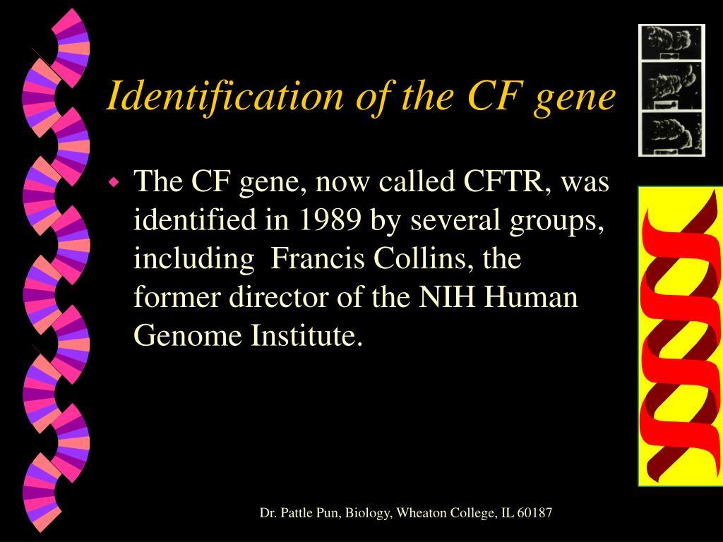 Identification of the CF gene