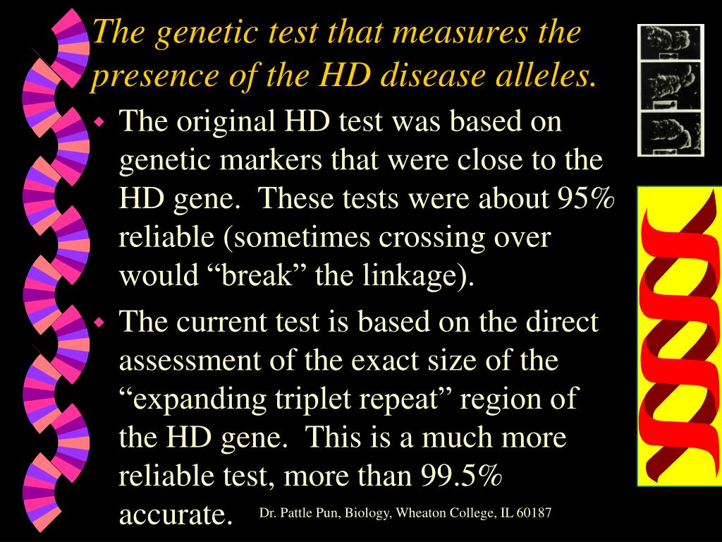 The genetic test that measures the presence of the HD disease alleles.