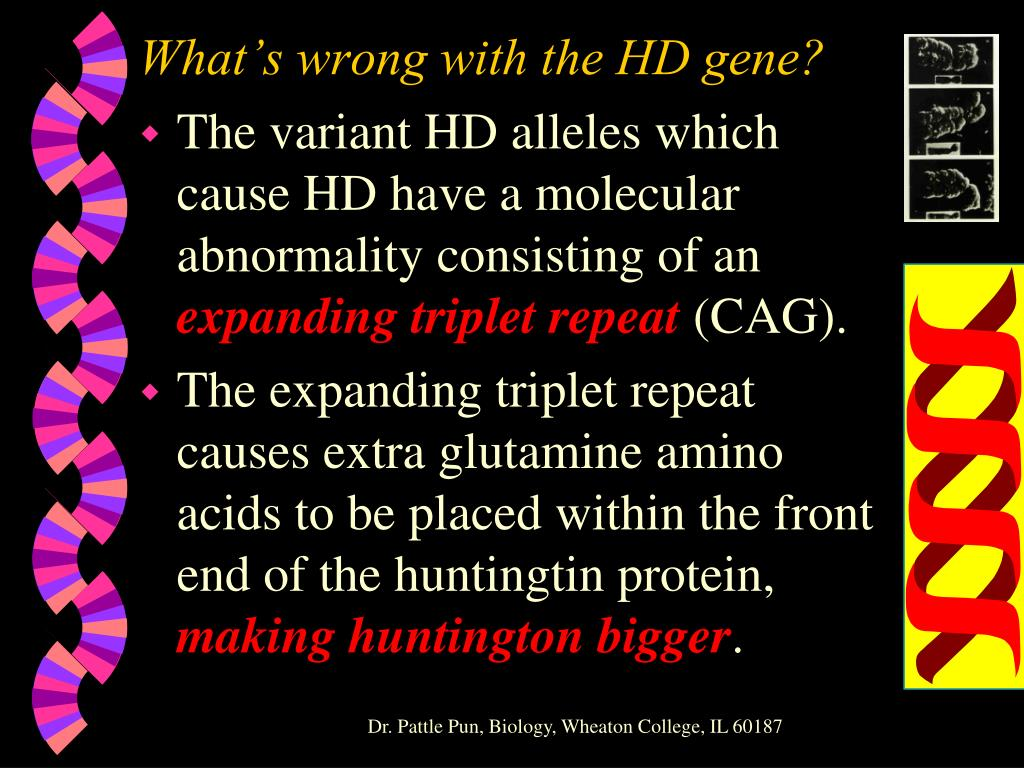 What's wrong with the HD gene?