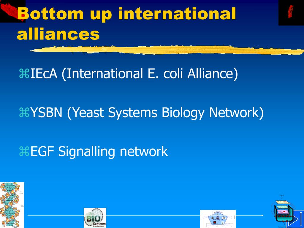 Bottom up international alliances