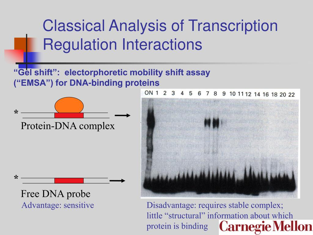 Classical Analysis of Transcription Regulation Interactions