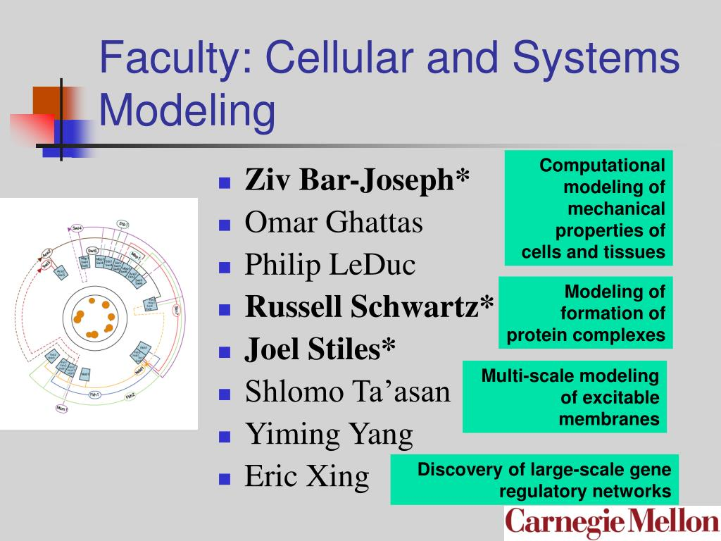 Faculty: Cellular and Systems Modeling
