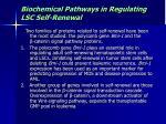biochemical pathways in regulating lsc self renewal