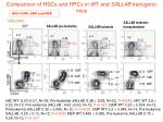 comparison of hscs and hpcs in wt and sall4b transgenic mice
