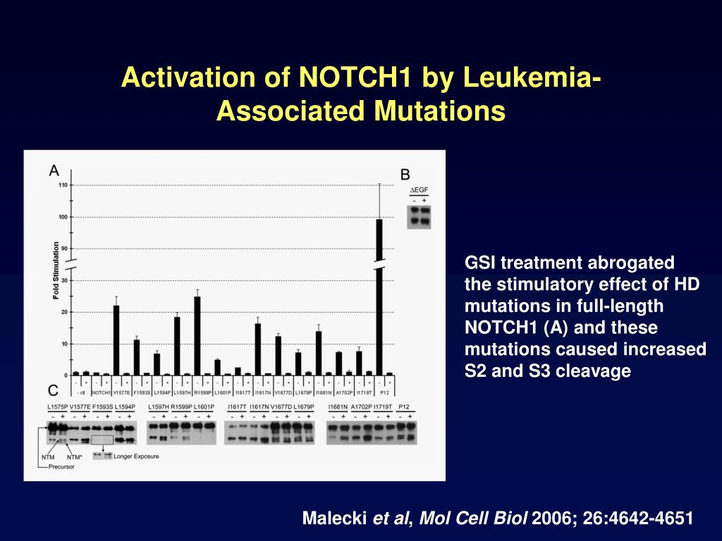 Activation of NOTCH1 by Leukemia-Associated Mutations