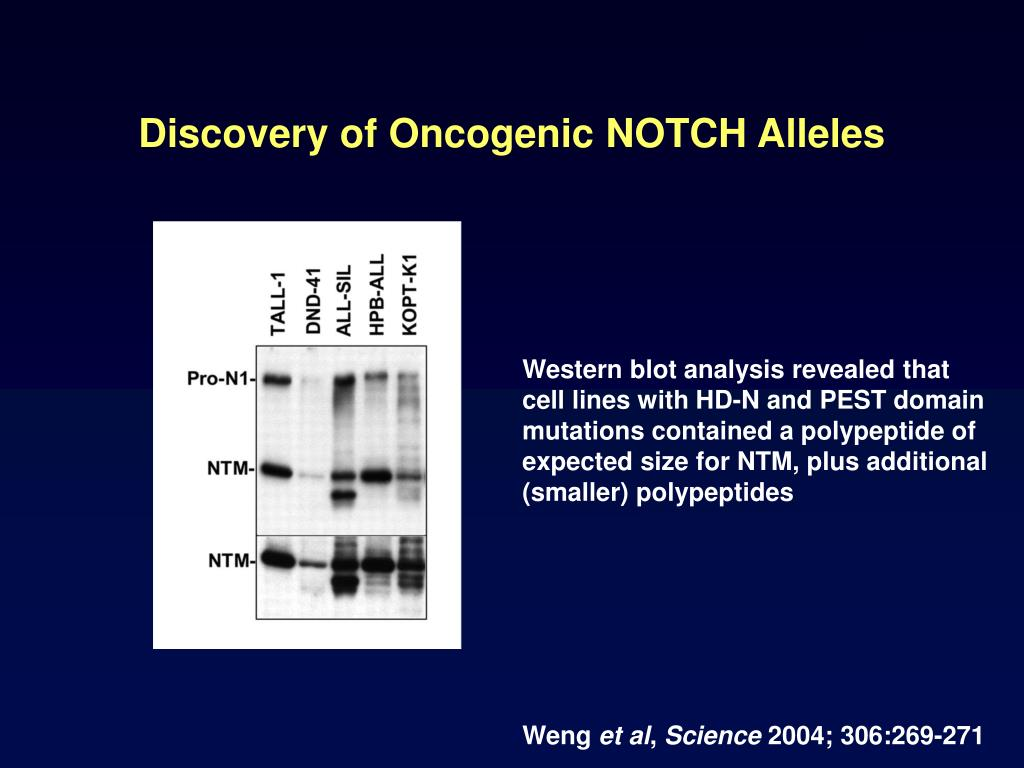 Discovery of Oncogenic NOTCH Alleles