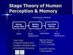 stage theory of human perception memory