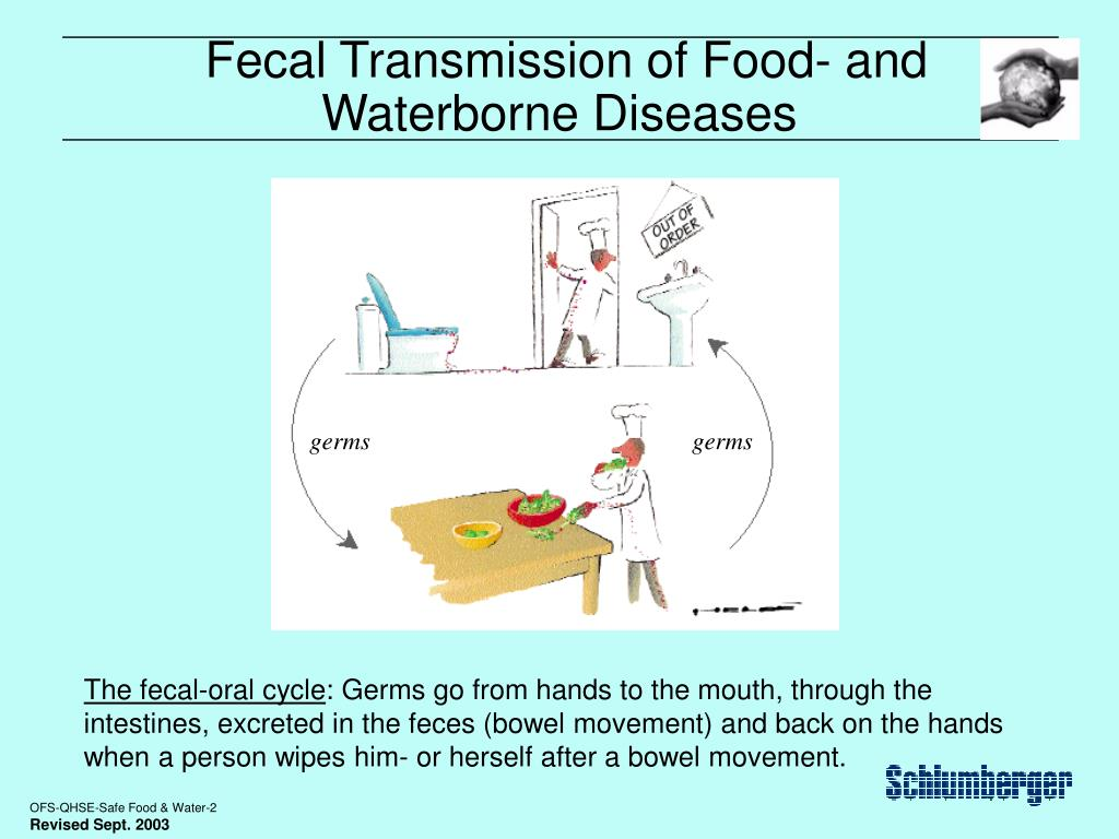 Fecal Transmission of Food- and