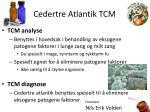 cedertre atlantik tcm