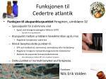 funksjonen til cedertre atlantik