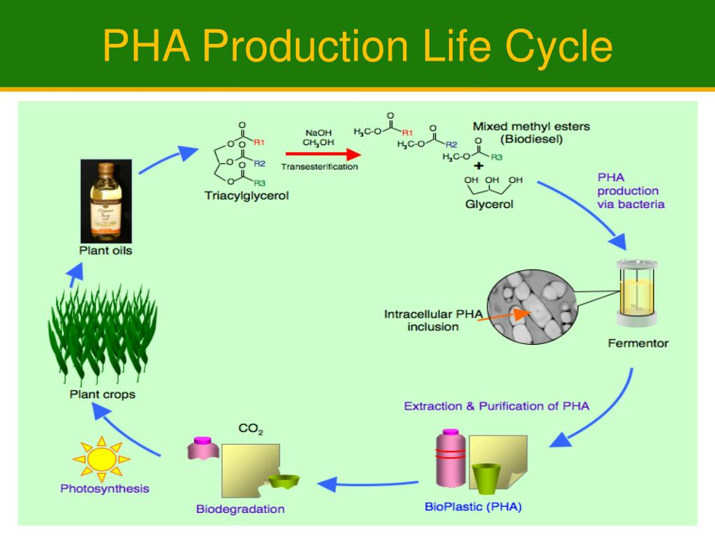PHA Production Life Cycle