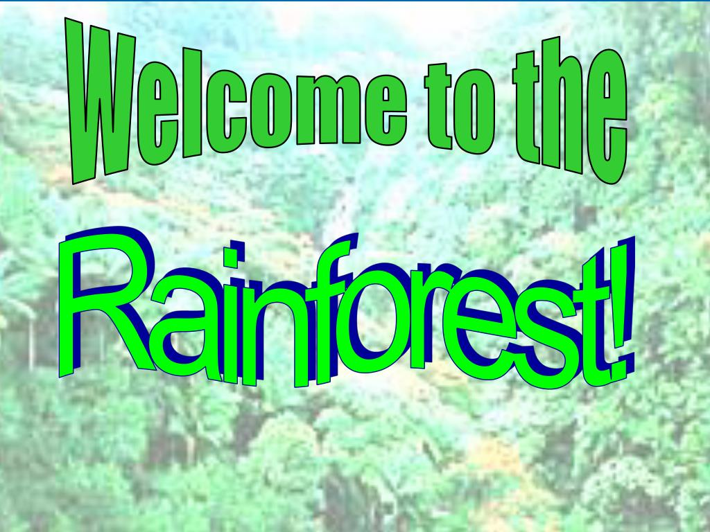 welcome to the rainforest l.