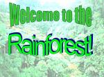 welcome to the rainforest