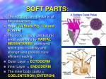 soft parts