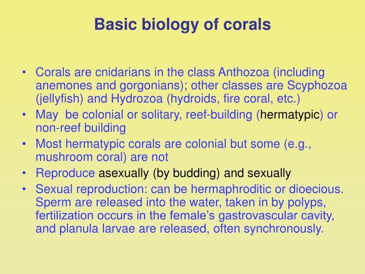 Basic biology of corals