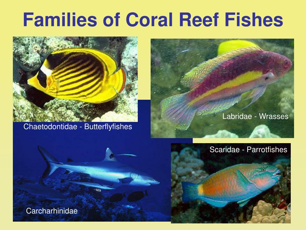 Families of Coral Reef Fishes