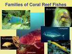 families of coral reef fishes37