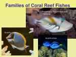 families of coral reef fishes38