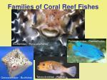 families of coral reef fishes40