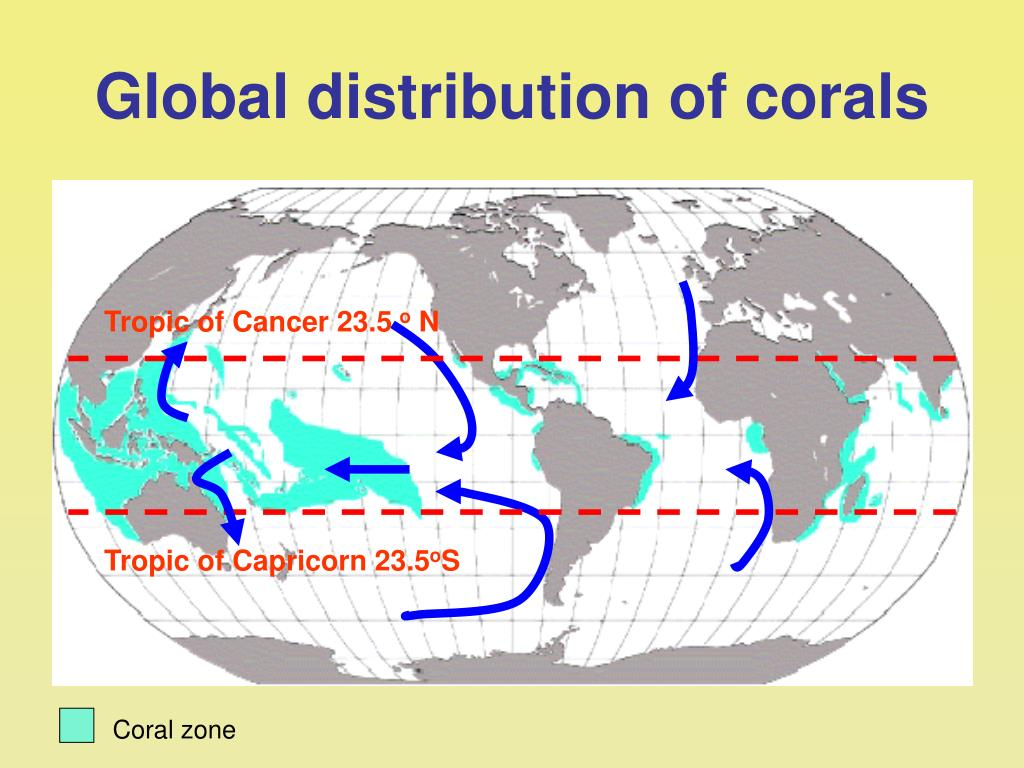 Global distribution of corals