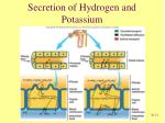 secretion of hydrogen and potassium